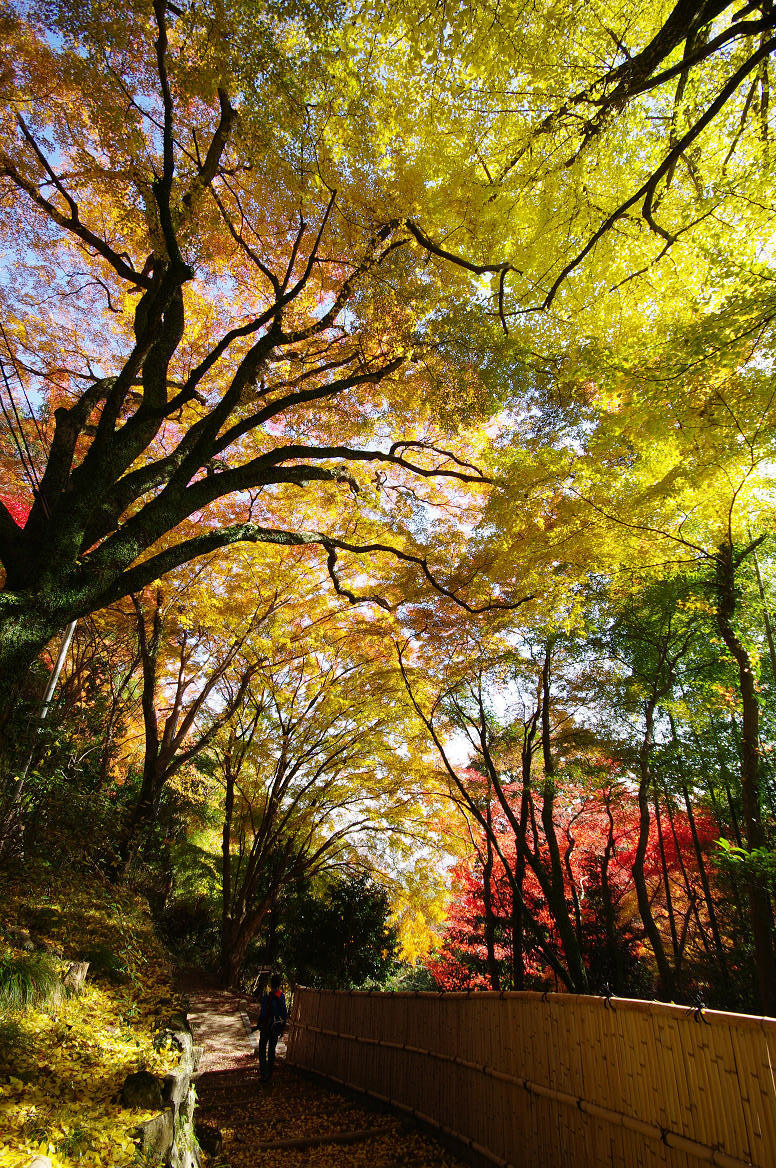 京都の紅葉 2013 〜金蔵寺〜_f0152550_01156.jpg