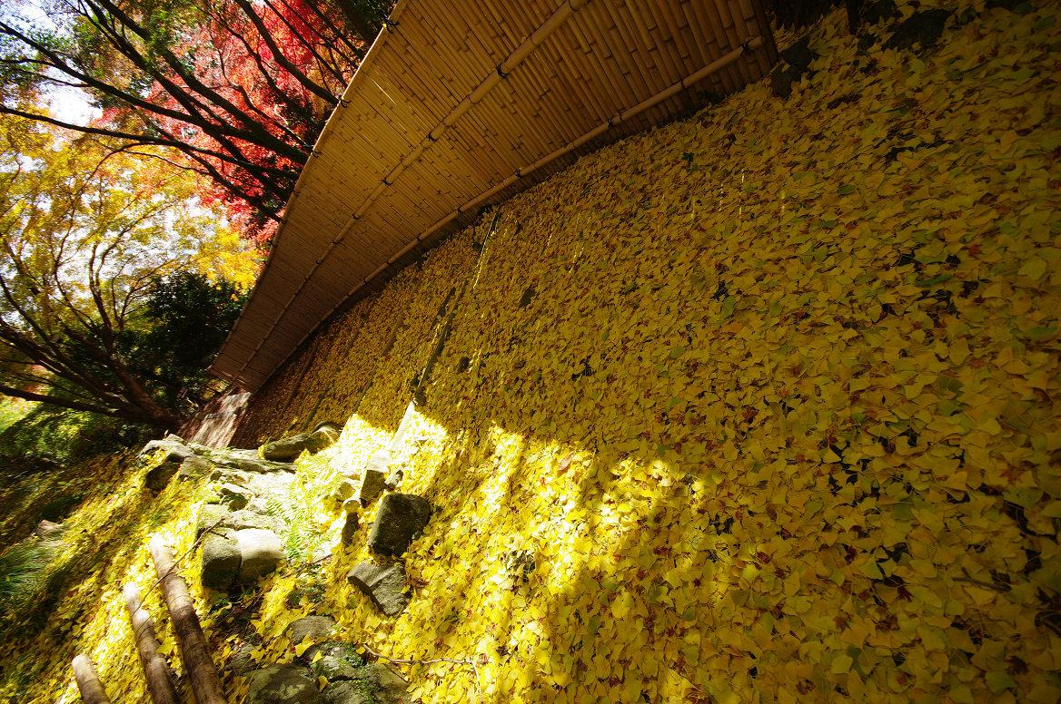 京都の紅葉 2013 〜金蔵寺〜_f0152550_012851.jpg