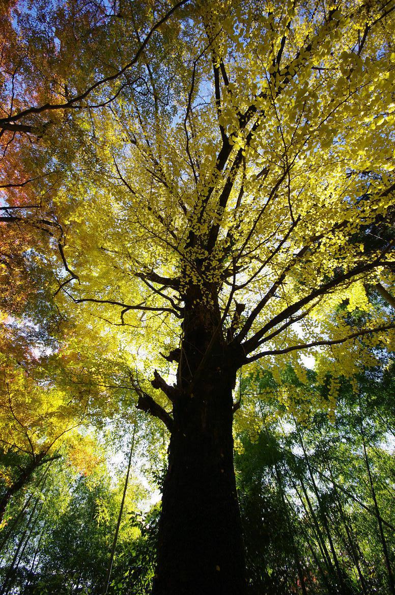 京都の紅葉 2013 〜金蔵寺〜_f0152550_01288.jpg
