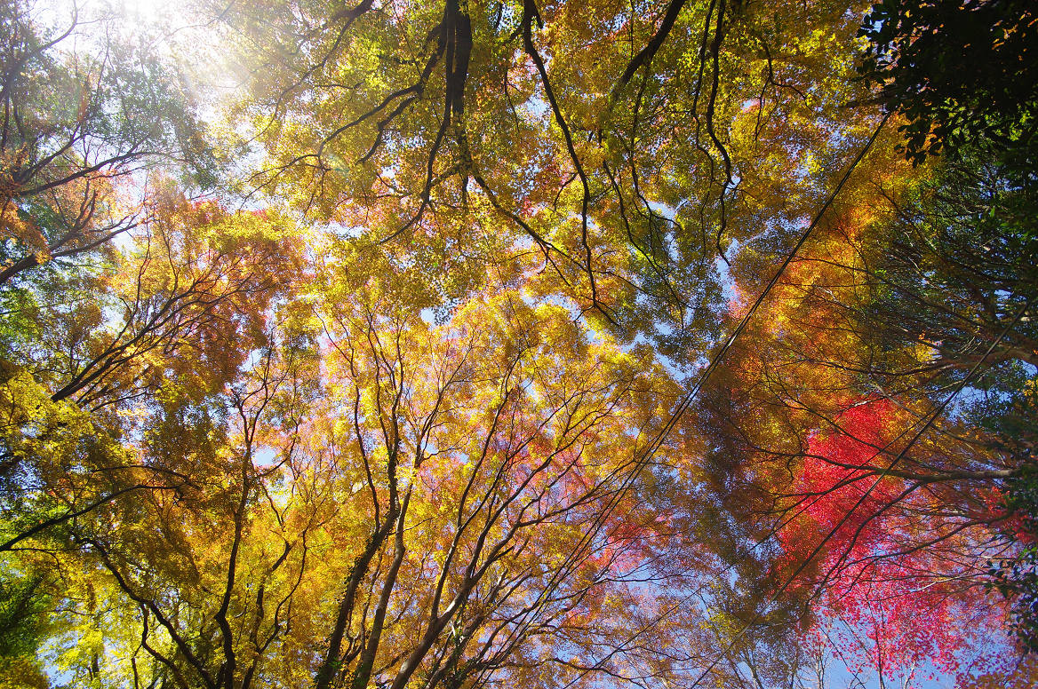 京都の紅葉 2013 〜金蔵寺〜_f0152550_014241.jpg