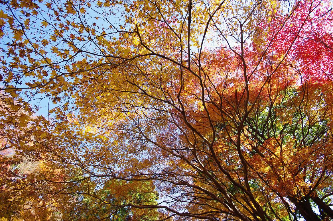 京都の紅葉 2013 〜金蔵寺〜_f0152550_015919.jpg