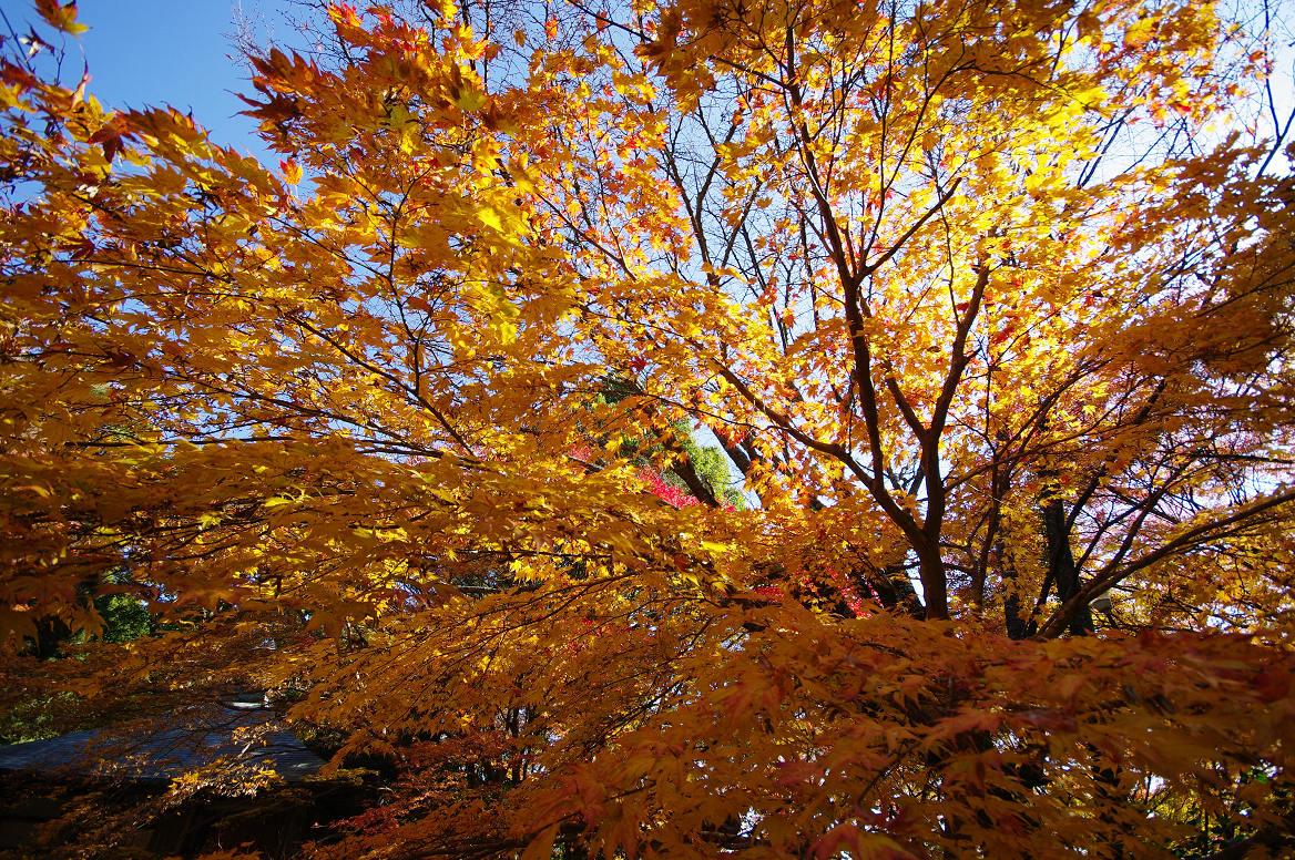 京都の紅葉 2013 〜金蔵寺〜_f0152550_021239.jpg