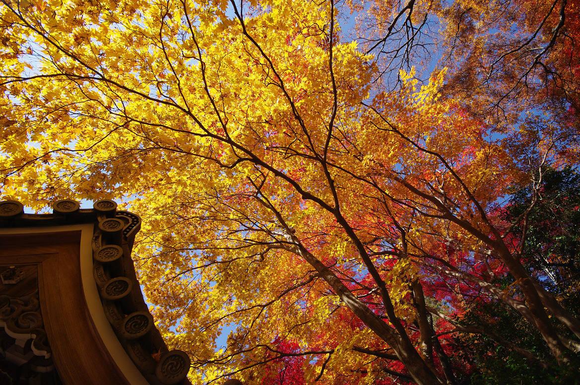 京都の紅葉 2013 〜金蔵寺〜_f0152550_022541.jpg