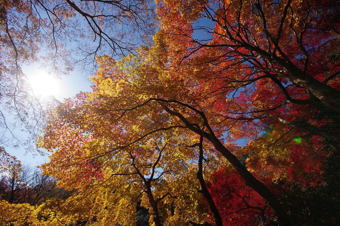 京都の紅葉 2013 〜金蔵寺〜_f0152550_033937.jpg