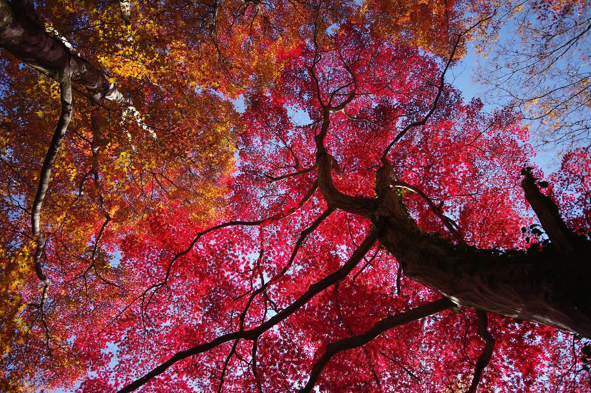京都の紅葉 2013 〜金蔵寺〜_f0152550_035211.jpg