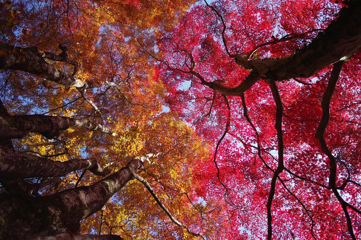 京都の紅葉 2013 〜金蔵寺〜_f0152550_041091.jpg