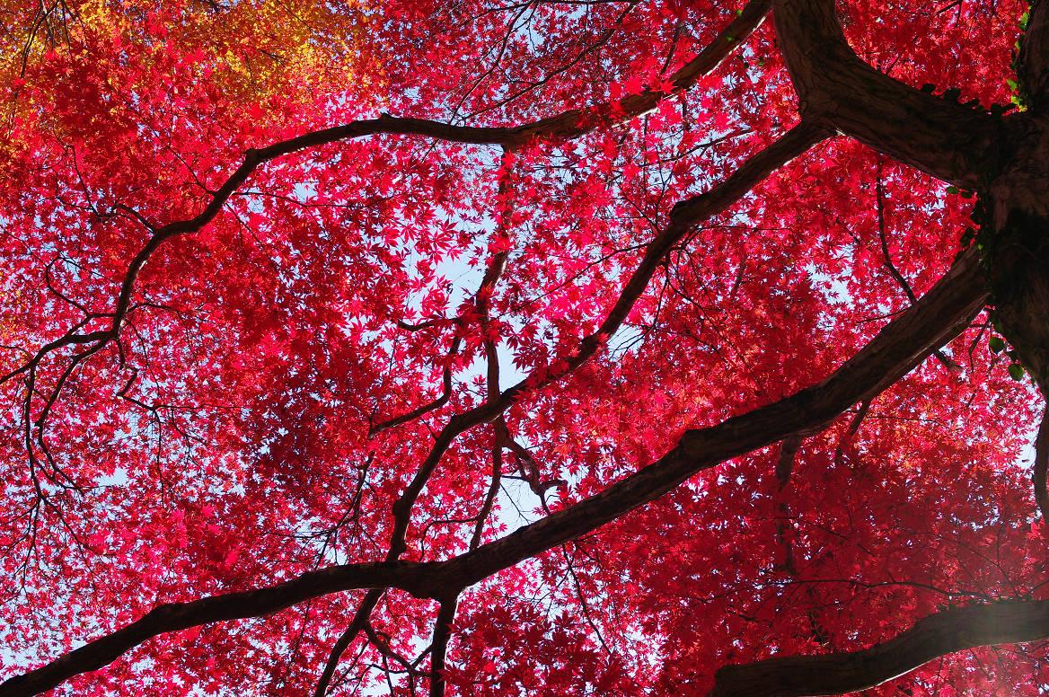 京都の紅葉 2013 〜金蔵寺〜_f0152550_042685.jpg