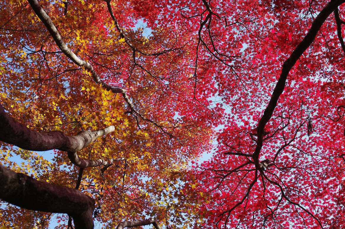京都の紅葉 2013 〜金蔵寺〜_f0152550_044037.jpg