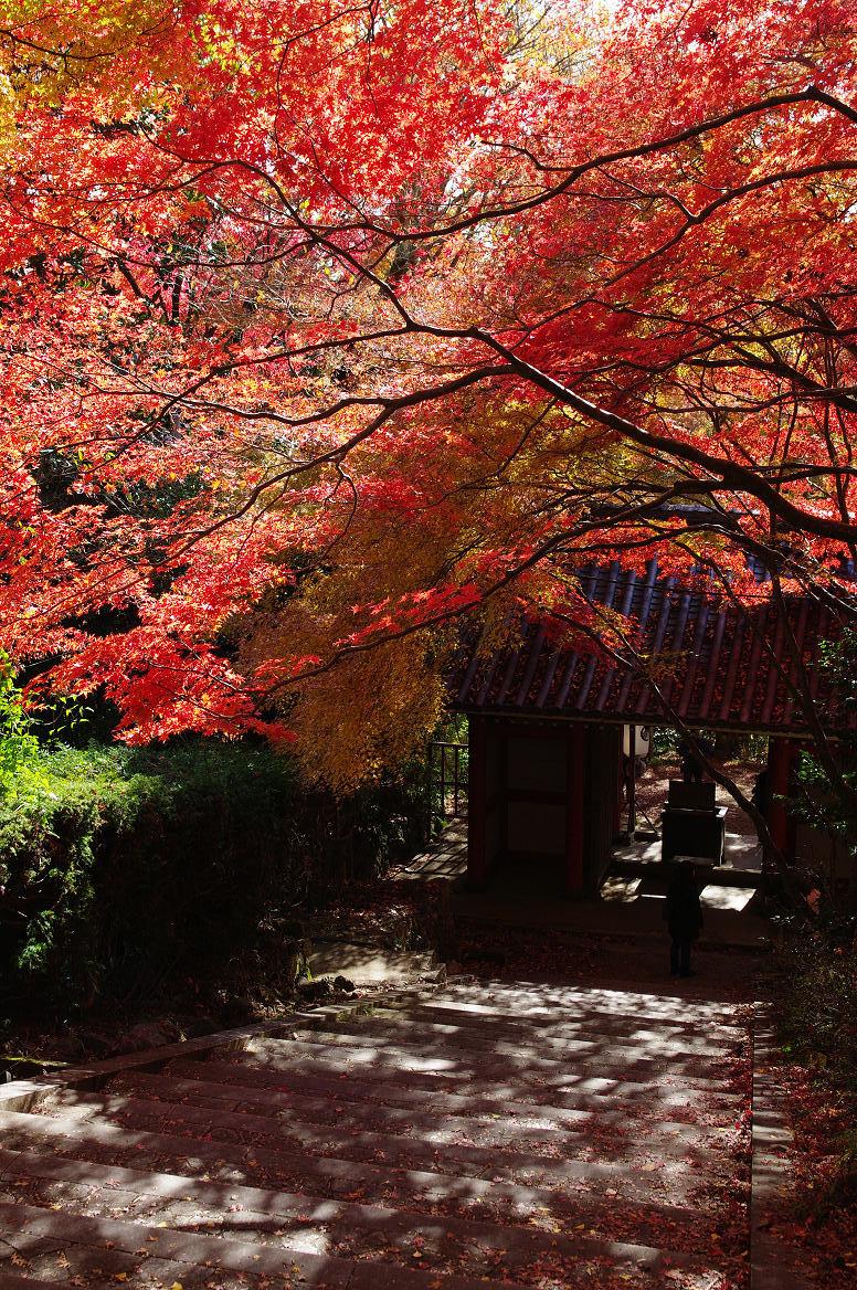 京都の紅葉 2013 〜金蔵寺〜_f0152550_053554.jpg