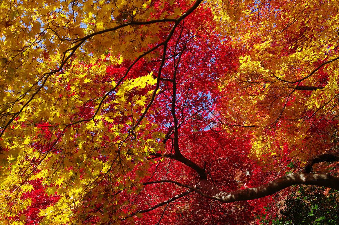 京都の紅葉 2013 〜金蔵寺〜_f0152550_05827.jpg