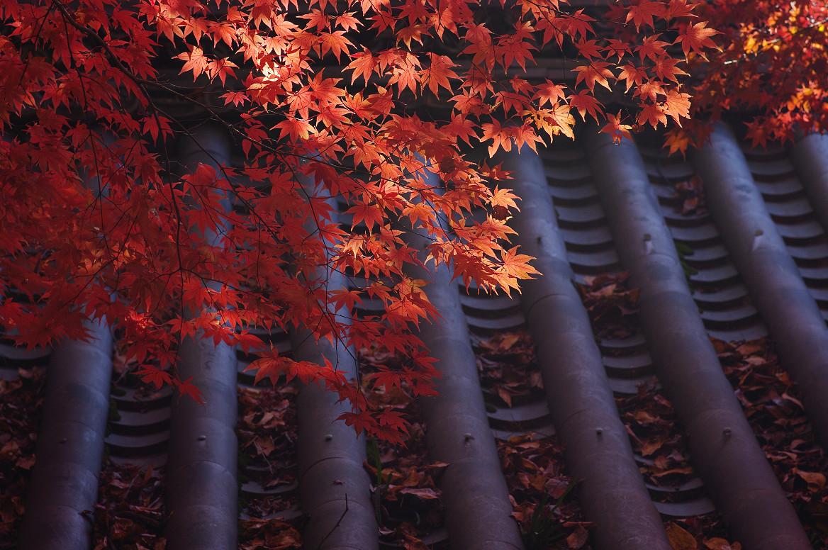京都の紅葉 2013 〜金蔵寺〜_f0152550_061927.jpg