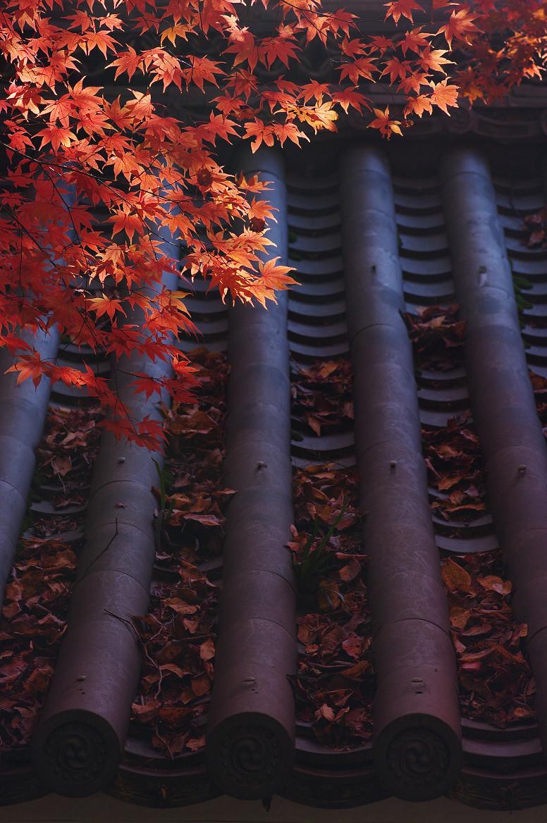 京都の紅葉 2013 〜金蔵寺〜_f0152550_063097.jpg