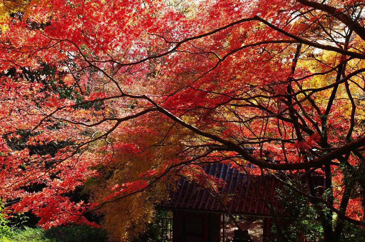 京都の紅葉 2013 〜金蔵寺〜_f0152550_06434.jpg
