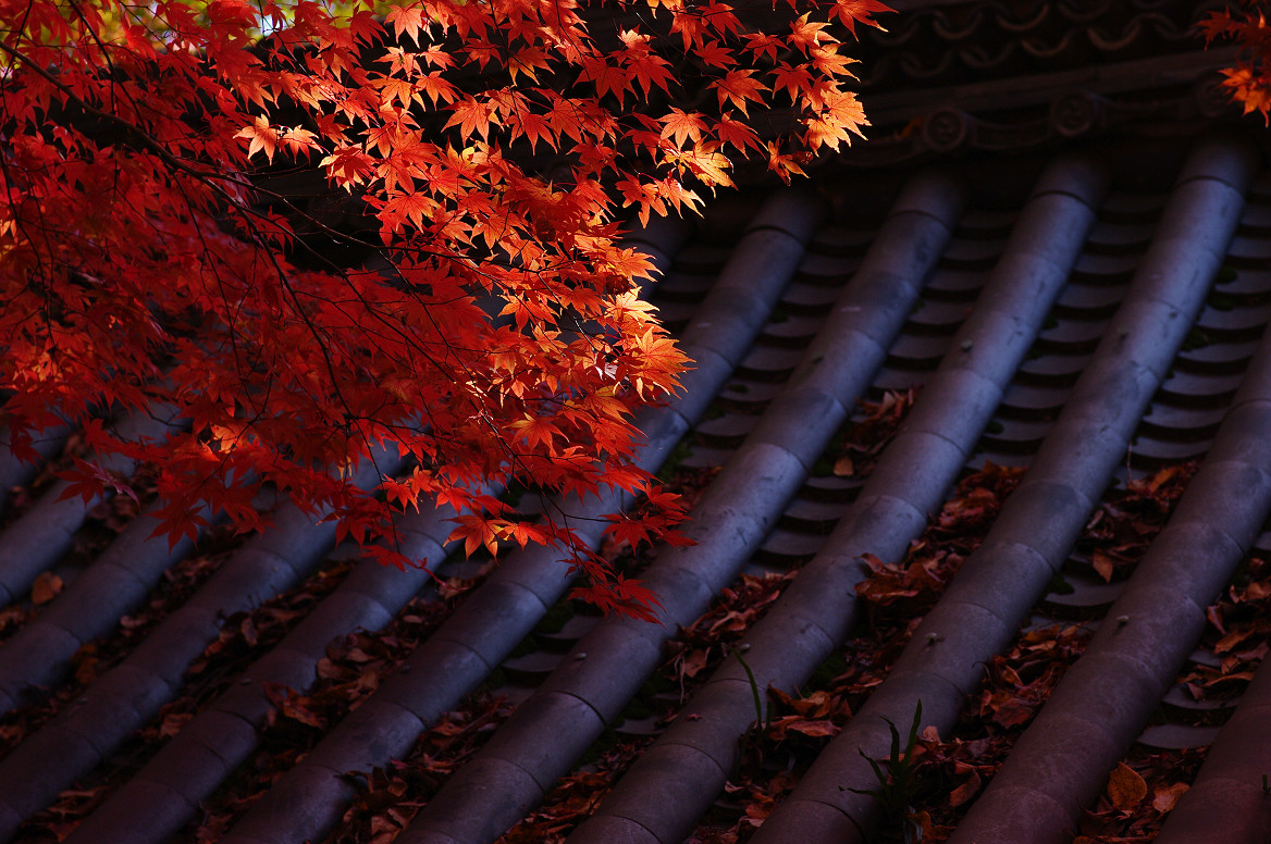 京都の紅葉 2013 〜金蔵寺〜_f0152550_064449.jpg