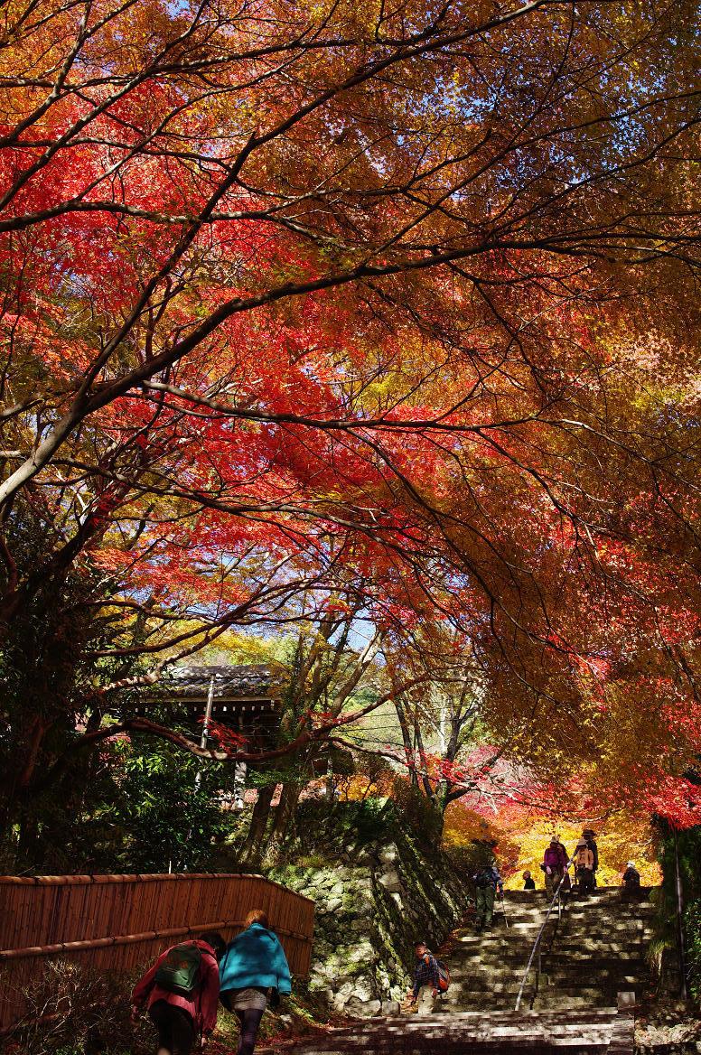 京都の紅葉 2013 〜金蔵寺〜_f0152550_23595540.jpg