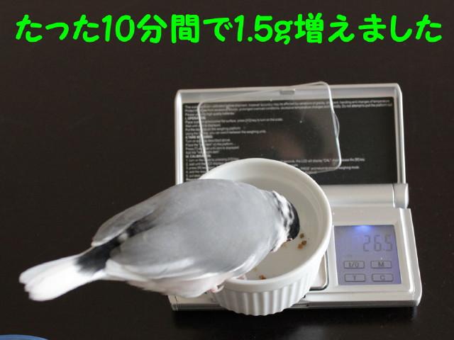 b0158061_22543332.jpg