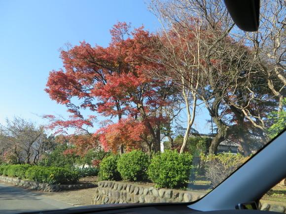 妙義山の絵、東京 紅葉_d0193569_16145937.jpg