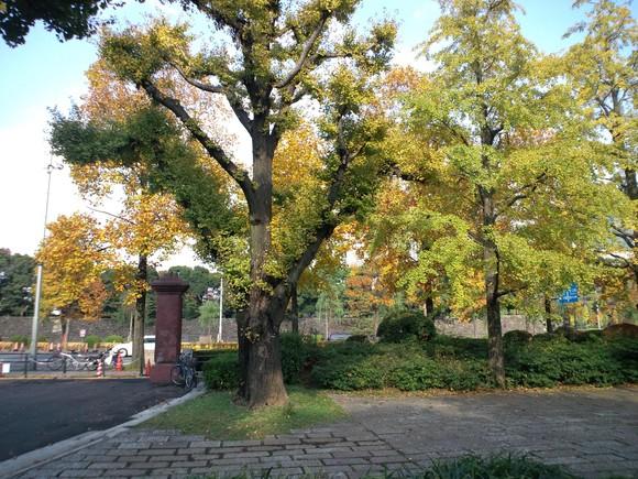 妙義山の絵、東京 紅葉_d0193569_1618388.jpg