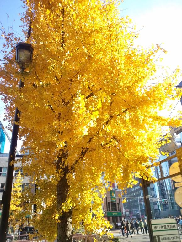 妙義山の絵、東京 紅葉_d0193569_16234363.jpg