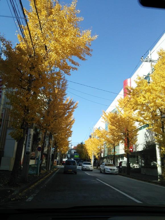 妙義山の絵、東京 紅葉_d0193569_1684164.jpg
