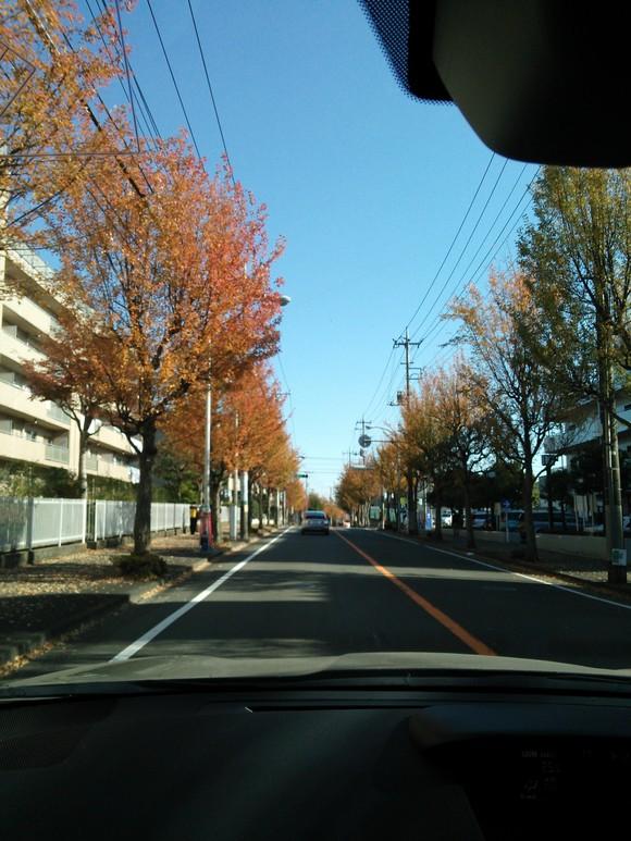妙義山の絵、東京 紅葉_d0193569_168563.jpg