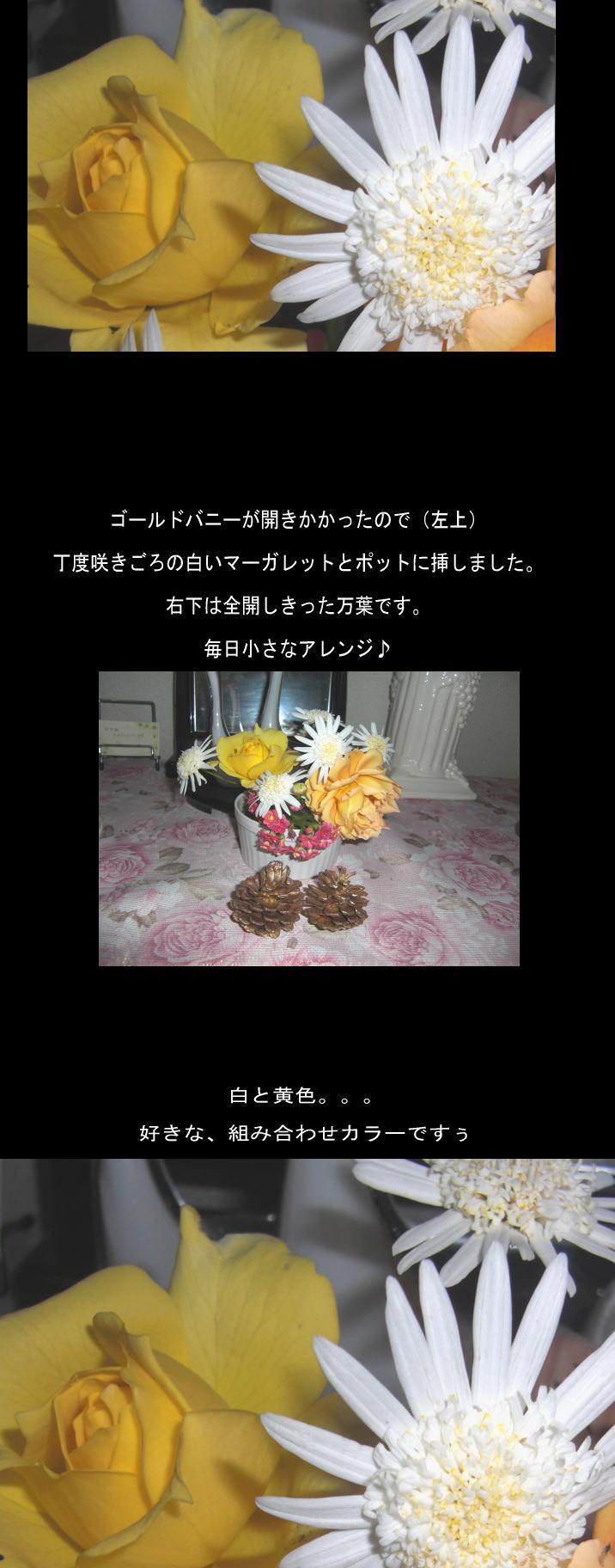 d0178877_20161160.jpg