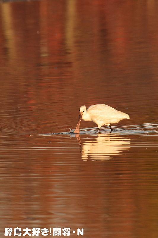 水面の紅葉とコラボ_f0059882_1041413.jpg