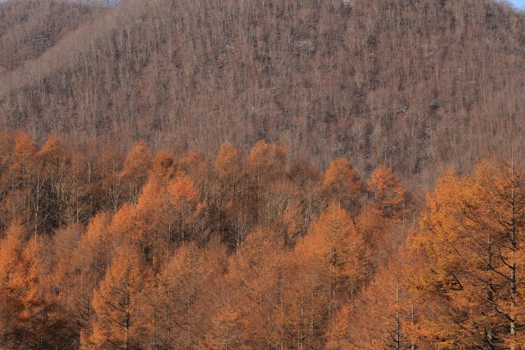 晩秋の情景 いなわしろ町 2013・11・16_e0143883_735434.jpg
