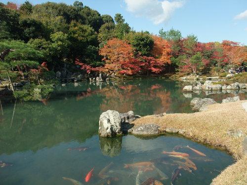 秋の京都_d0105395_21155678.jpg