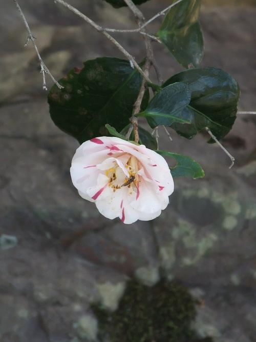 秋の京都_d0105395_21203599.jpg