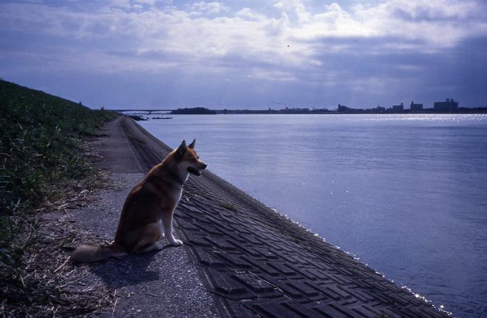 犬連れのはじまり_c0049299_19111477.jpg