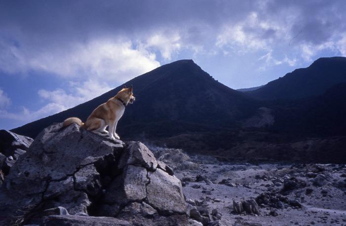 犬連れのはじまり_c0049299_19182363.jpg