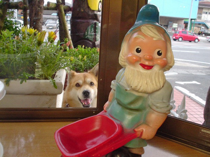 犬連れのはじまり_c0049299_19192725.jpg