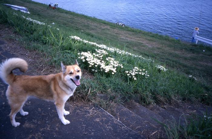 犬連れのはじまり_c0049299_19205657.jpg