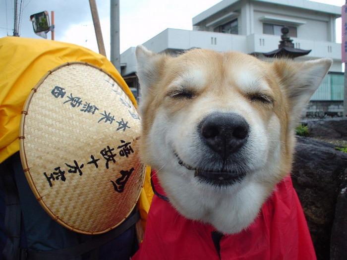 犬連れのはじまり_c0049299_19264083.jpg