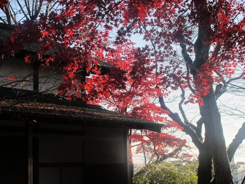 晩秋、千秋公園の紅葉・黄葉・落葉のルクス(lux)・・・その7_c0075701_6124767.jpg