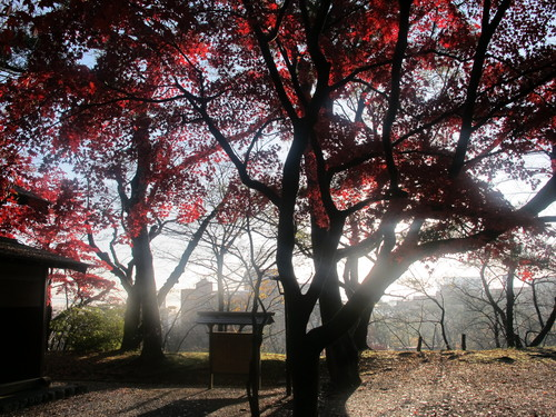 晩秋、千秋公園の紅葉・黄葉・落葉のルクス(lux)・・・その7_c0075701_6125289.jpg