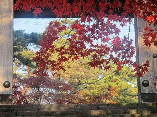 晩秋、千秋公園の紅葉・黄葉・落葉のルクス(lux)・・・その7_c0075701_613180.jpg