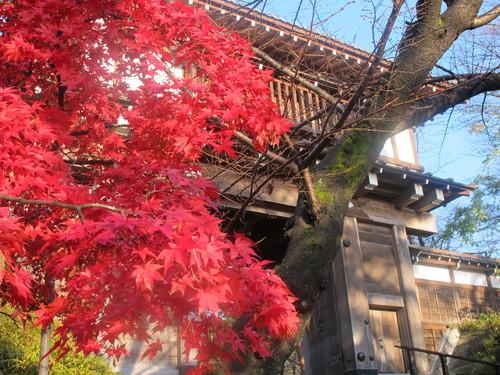 晩秋、千秋公園の紅葉・黄葉・落葉のルクス(lux)・・・その7_c0075701_6132020.jpg