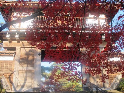 晩秋、千秋公園の紅葉・黄葉・落葉のルクス(lux)・・・その7_c0075701_613578.jpg