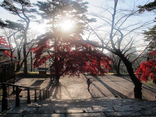 晩秋、千秋公園の紅葉・黄葉・落葉のルクス(lux)・・・その8_c0075701_6235568.jpg