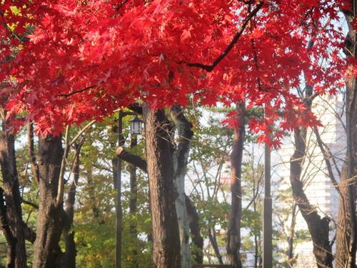 晩秋、千秋公園の紅葉・黄葉・落葉のルクス(lux)・・・その8_c0075701_624028.jpg