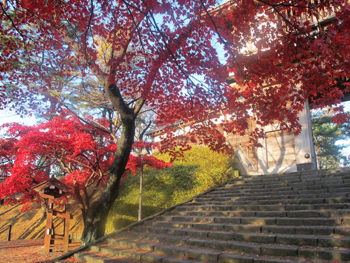 晩秋、千秋公園の紅葉・黄葉・落葉のルクス(lux)・・・その8_c0075701_624087.jpg