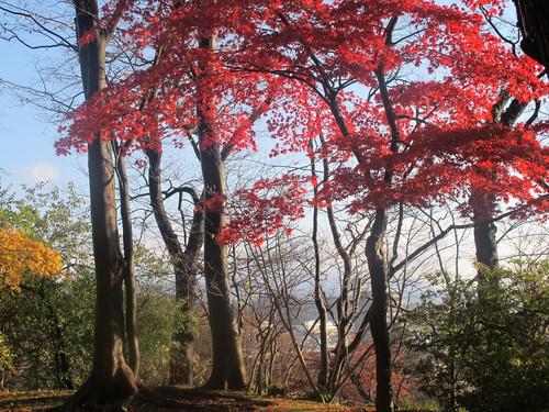 晩秋、千秋公園の紅葉・黄葉・落葉のルクス(lux)・・・その8_c0075701_624126.jpg