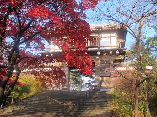 晩秋、千秋公園の紅葉・黄葉・落葉のルクス(lux)・・・その8_c0075701_624484.jpg