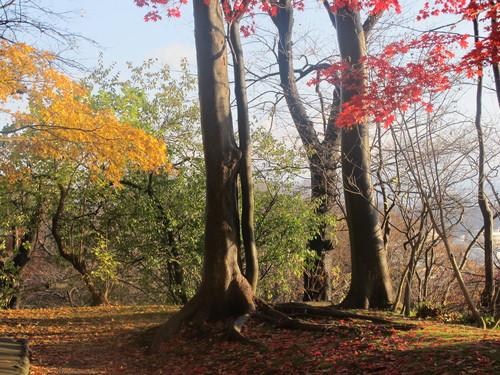 晩秋、千秋公園の紅葉・黄葉・落葉のルクス(lux)・・・その8_c0075701_624778.jpg