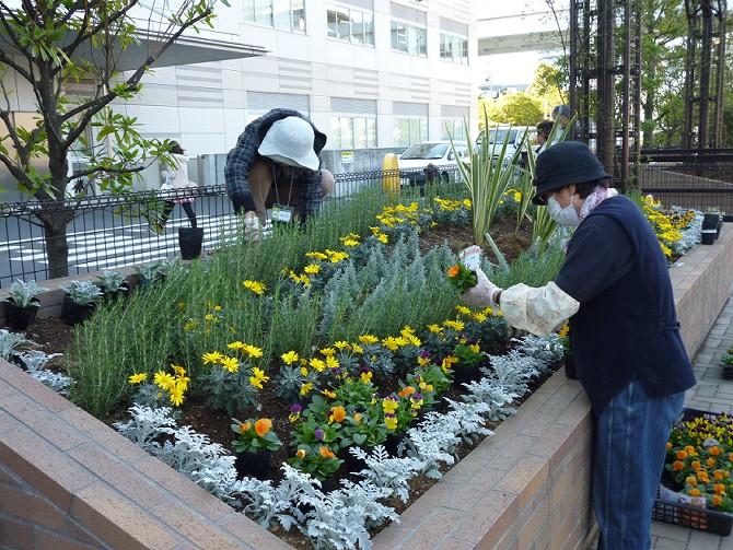 【11月20日ガーデンクラブの活動】_e0235911_17494363.jpg