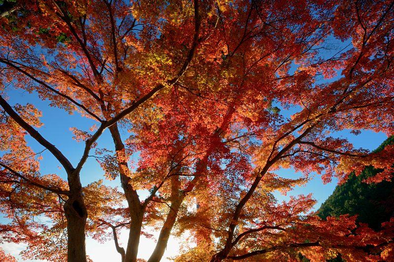 2013京都の紅葉!・善峰寺 其の二_f0032011_19355477.jpg