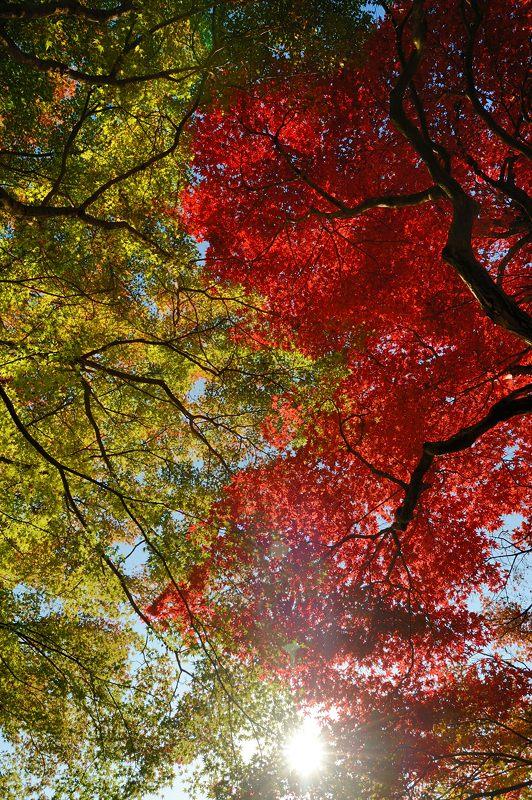 2013京都の紅葉!・善峰寺 其の二_f0032011_19362144.jpg