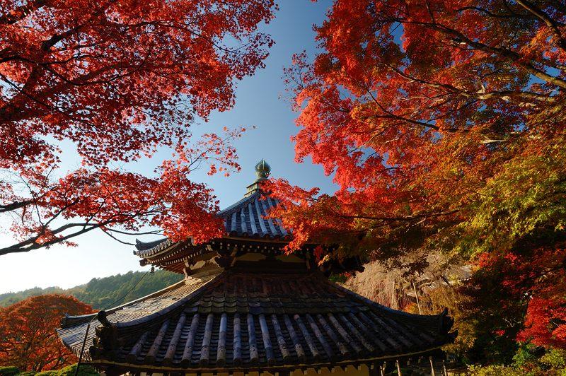 2013京都の紅葉!・善峰寺 其の二_f0032011_1936295.jpg
